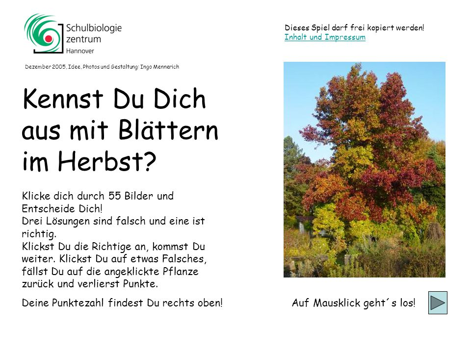 Berg-Ahorn (mit Pilzbefall)Berg-Ahorn (mit Pilzbefall) Spitz-Ahorn Amberbaum Platane (mit Pilzbefall)Platane (mit Pilzbefall) 51