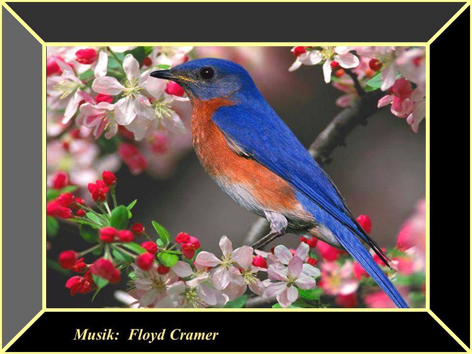 Musik: Floyd Cramer