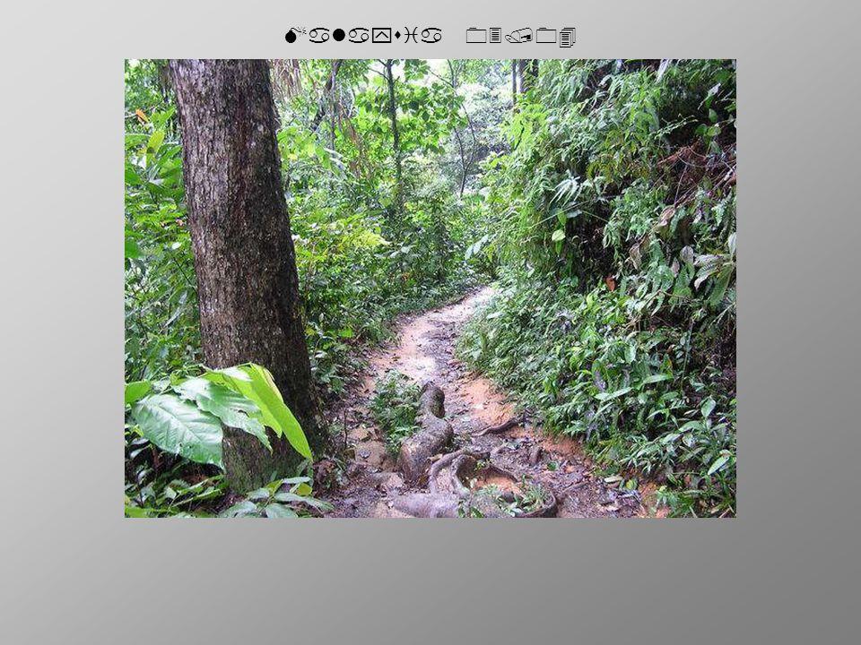 Malaysia 03/04 The End.Die nächsten kommen bestimmt.