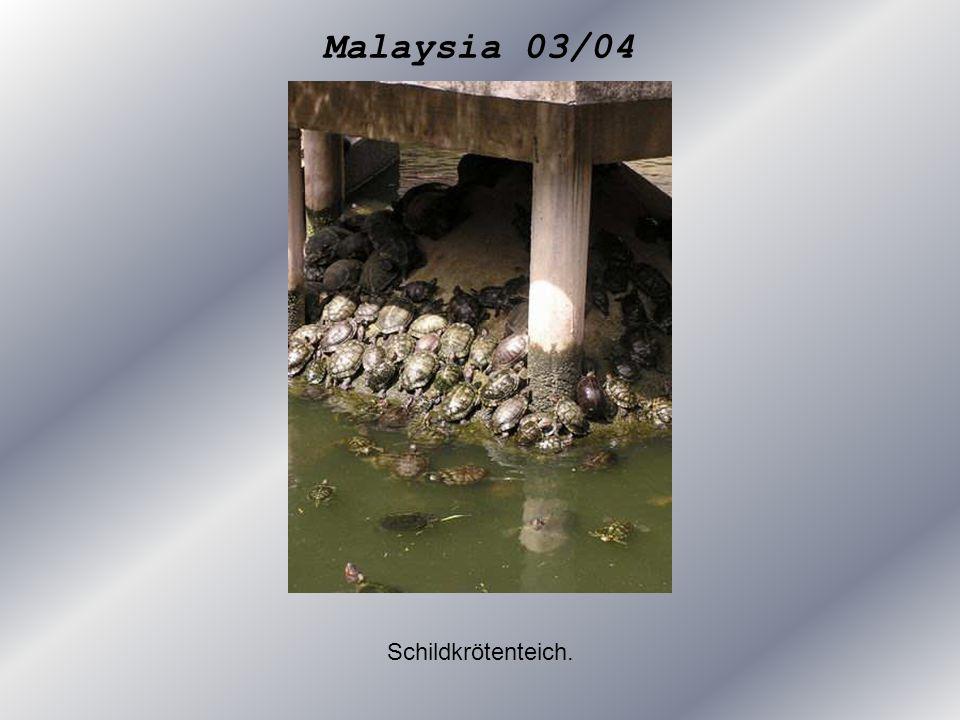 Malaysia 03/04 Schildkrötenteich.