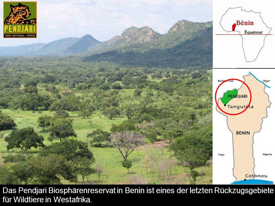 Das Pendjari Biosphärenreservat in Benin ist eines der letzten Rückzugsgebiete für Wildtiere in Westafrika.