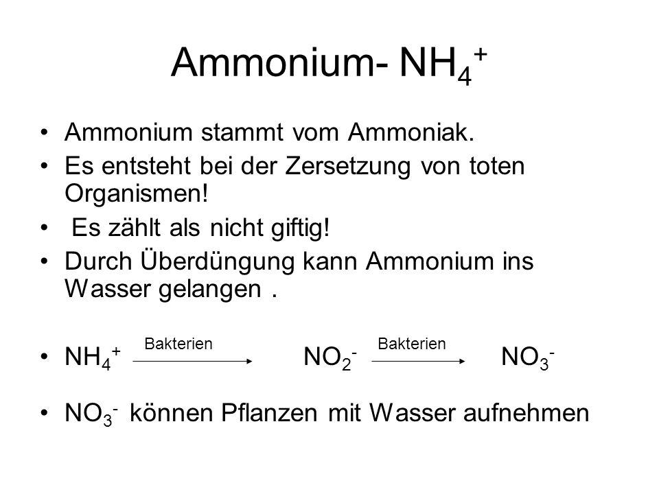 Ammonium- NH 4 + Ammonium stammt vom Ammoniak. Es entsteht bei der Zersetzung von toten Organismen! Es zählt als nicht giftig! Durch Überdüngung kann