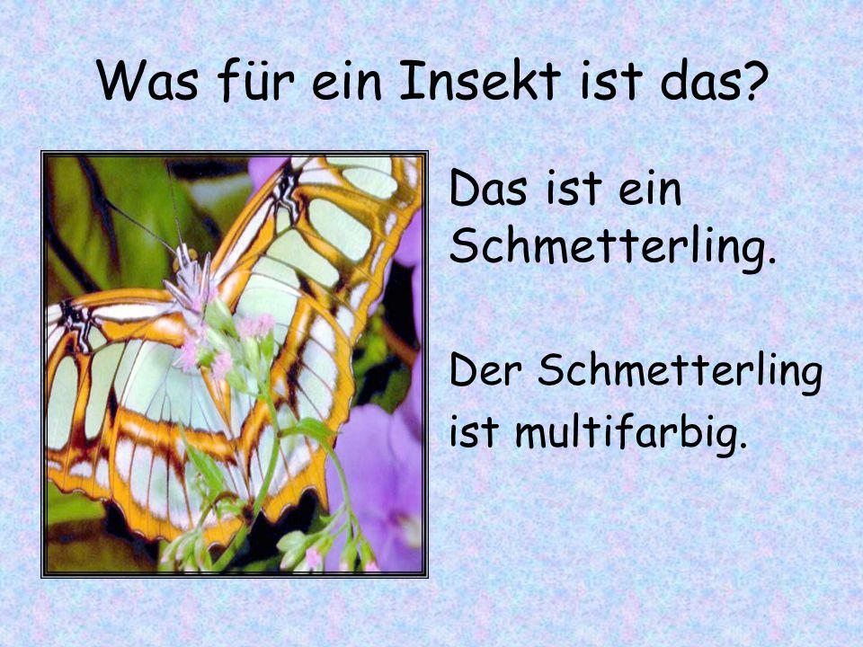 Was für ein Insekt ist das? Der Schmetterling ist multifarbig. Das ist ein Schmetterling.