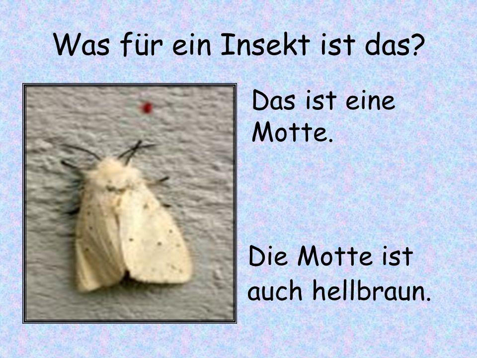 Was für ein Insekt ist das? Die Motte ist auch hellbraun. Das ist eine Motte.