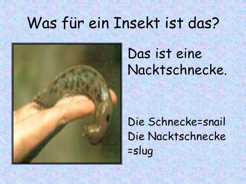 Was für ein Insekt ist das? Die Schnecke=snail Die Nacktschnecke =slug Das ist eine Nacktschnecke.