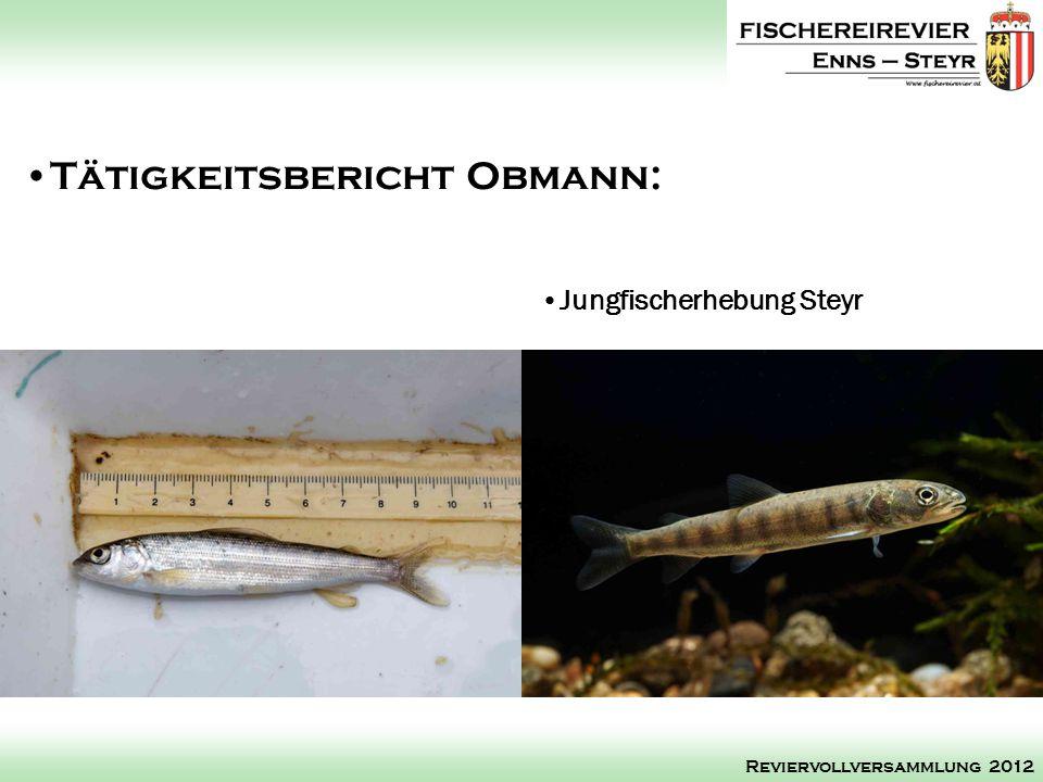 Jungfischerhebung Steyr Tätigkeitsbericht Obmann: Reviervollversammlung 2012