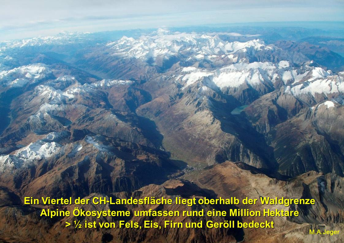 Ein Viertel der CH-Landesfläche liegt oberhalb der Waldgrenze Alpine Ökosysteme umfassen rund eine Million Hektare > ½ ist von Fels, Eis, Firn und Geröll bedeckt M.A.Jeger
