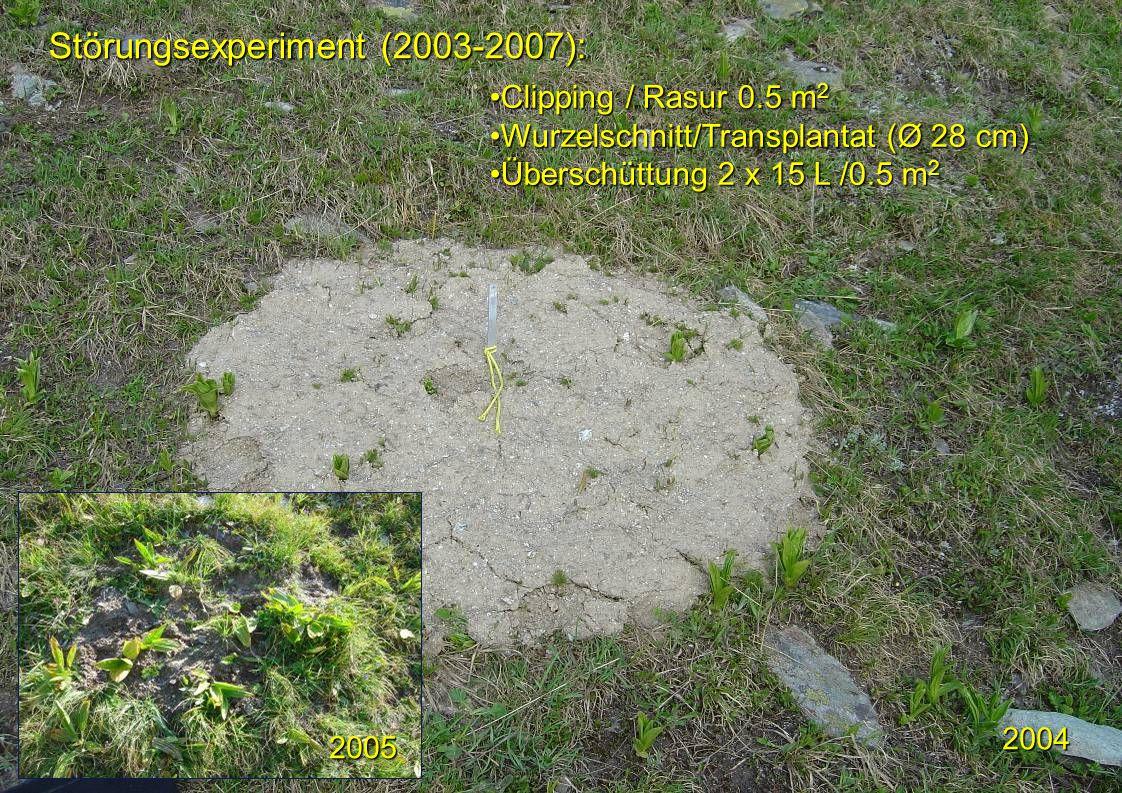 Störungsexperiment (2003-2007): 2005 2004 Clipping / Rasur 0.5 m 2Clipping / Rasur 0.5 m 2 Wurzelschnitt/Transplantat (Ø 28 cm)Wurzelschnitt/Transplan