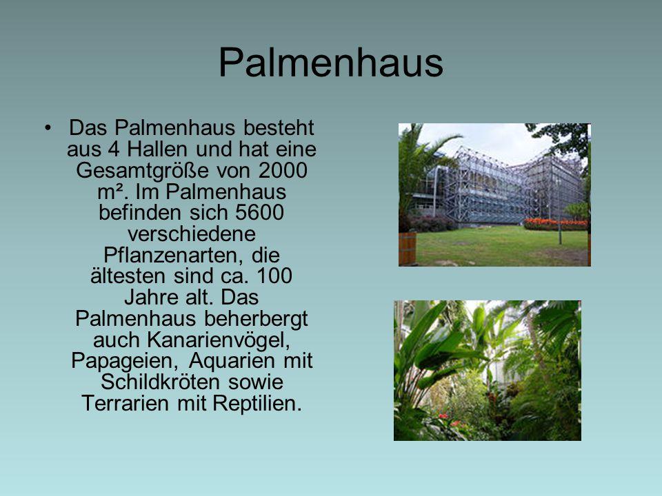 Palmenhaus Das Palmenhaus besteht aus 4 Hallen und hat eine Gesamtgröße von 2000 m². Im Palmenhaus befinden sich 5600 verschiedene Pflanzenarten, die