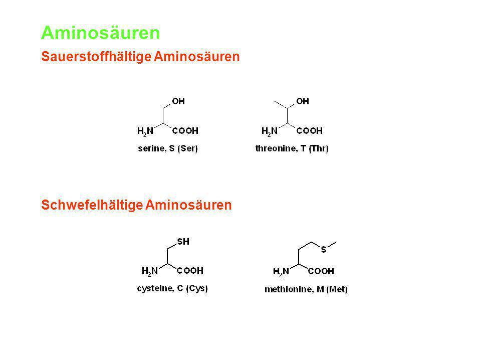 Aminosäuren Sauerstoffhältige Aminosäuren Schwefelhältige Aminosäuren