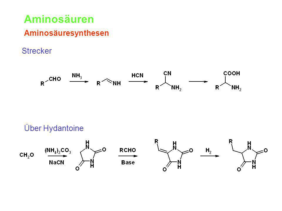 Aminosäuren Aminosäuresynthesen Über Hydantoine Strecker