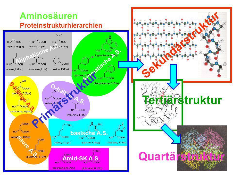 Aminosäuren Proteinstrukturhierarchien Aliphatische A.S.
