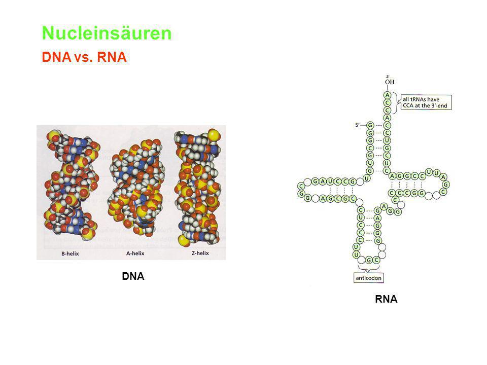Nucleinsäuren DNA vs. RNA DNA RNA