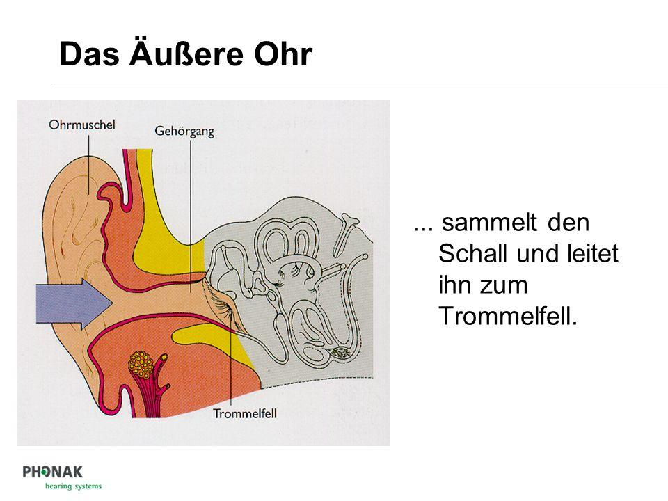 Aufbau und Funktion des Hörorgans