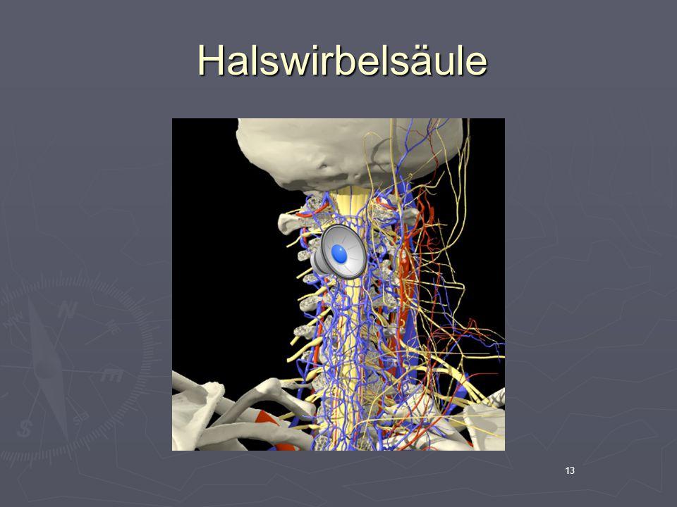 13 Halswirbelsäule Halswirbelsäule