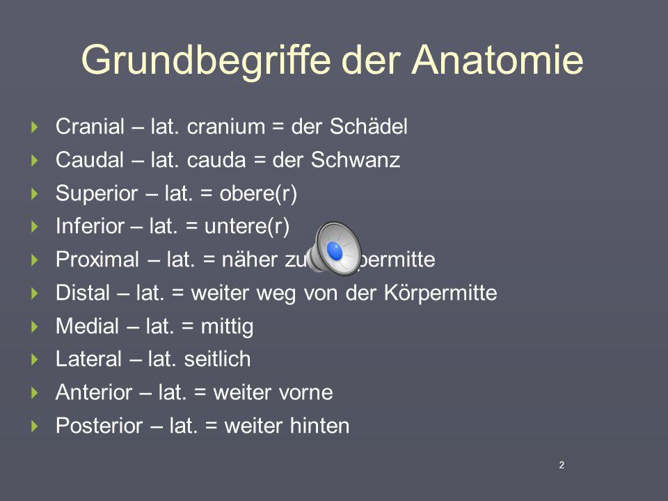 Grundbegriffe der Anatomie  Cranial – lat. cranium = der Schädel  Caudal – lat. cauda = der Schwanz  Superior – lat. = obere(r)  Inferior – lat. =
