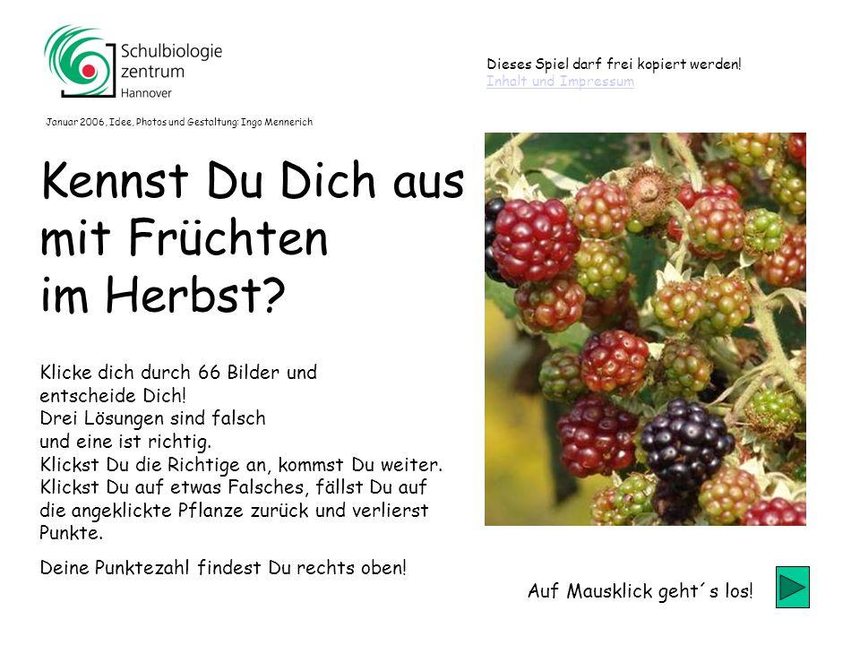 60 Schönfrucht Liguster Krähenbeere Schwarzer Holunder 60