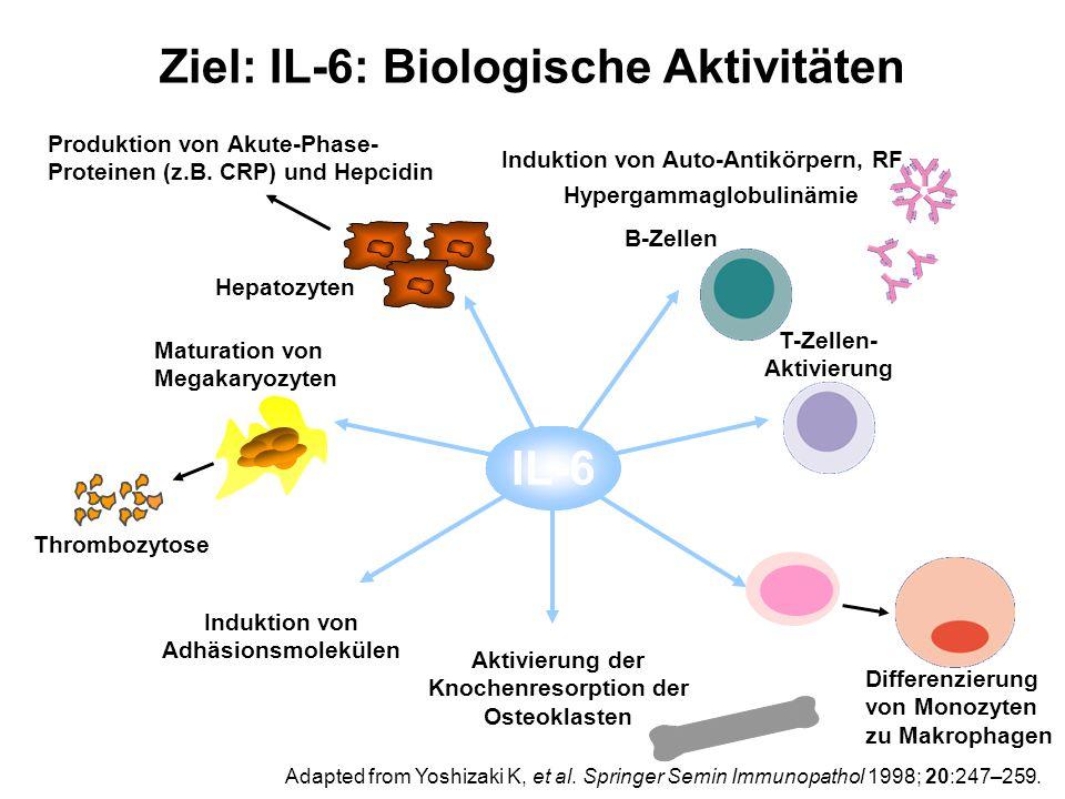 Aktivierung der Knochenresorption der Osteoklasten T-Zellen- Aktivierung Induktion von Adhäsionsmolekülen B-Zellen Hypergammaglobulinämie Induktion vo