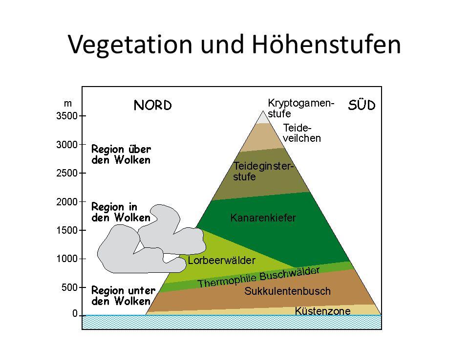 Vegetation und Höhenstufen