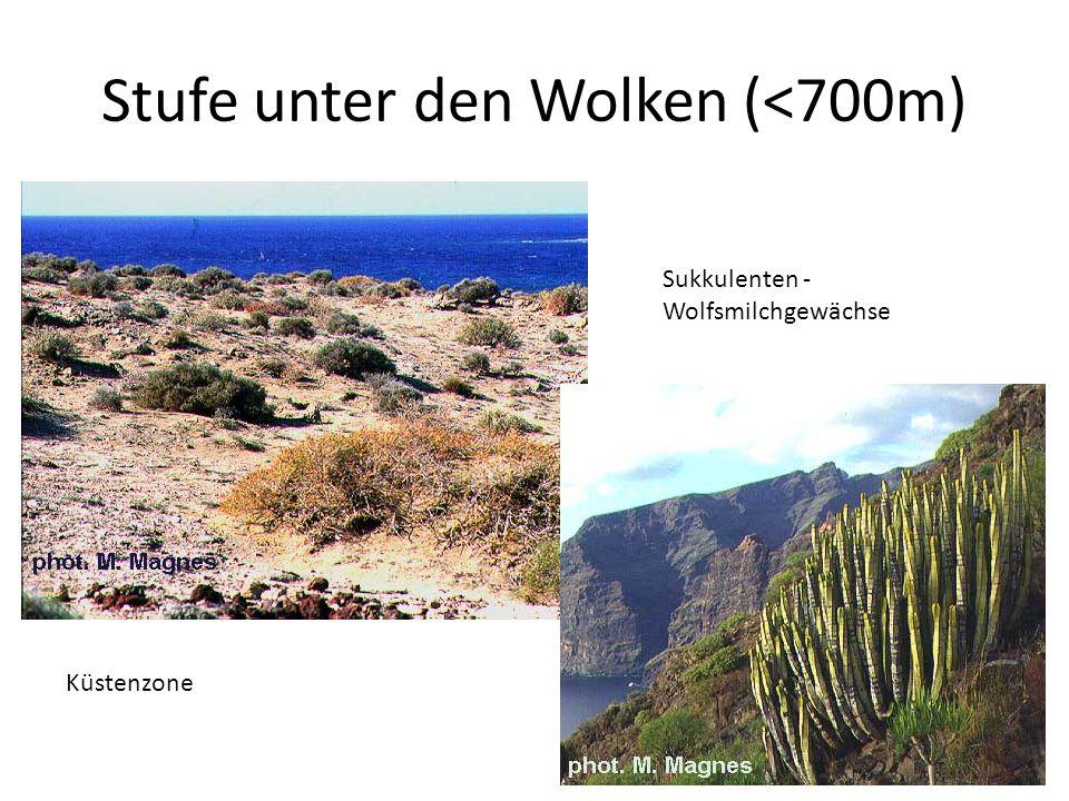 Stufe unter den Wolken (<700m) Küstenzone Sukkulenten - Wolfsmilchgewächse