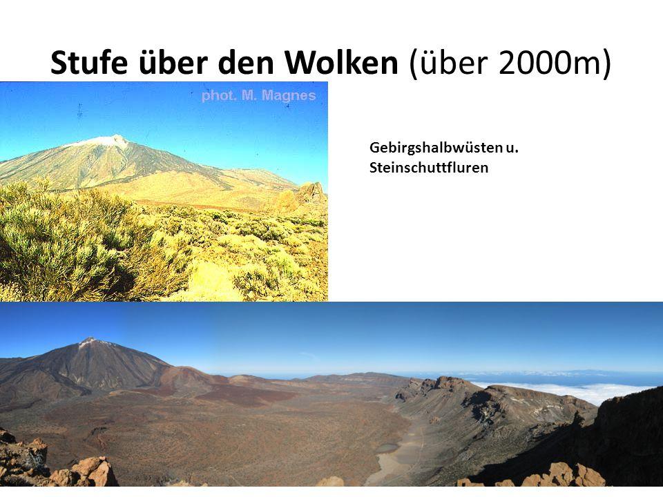 Stufe über den Wolken (über 2000m) Gebirgshalbwüsten u. Steinschuttfluren