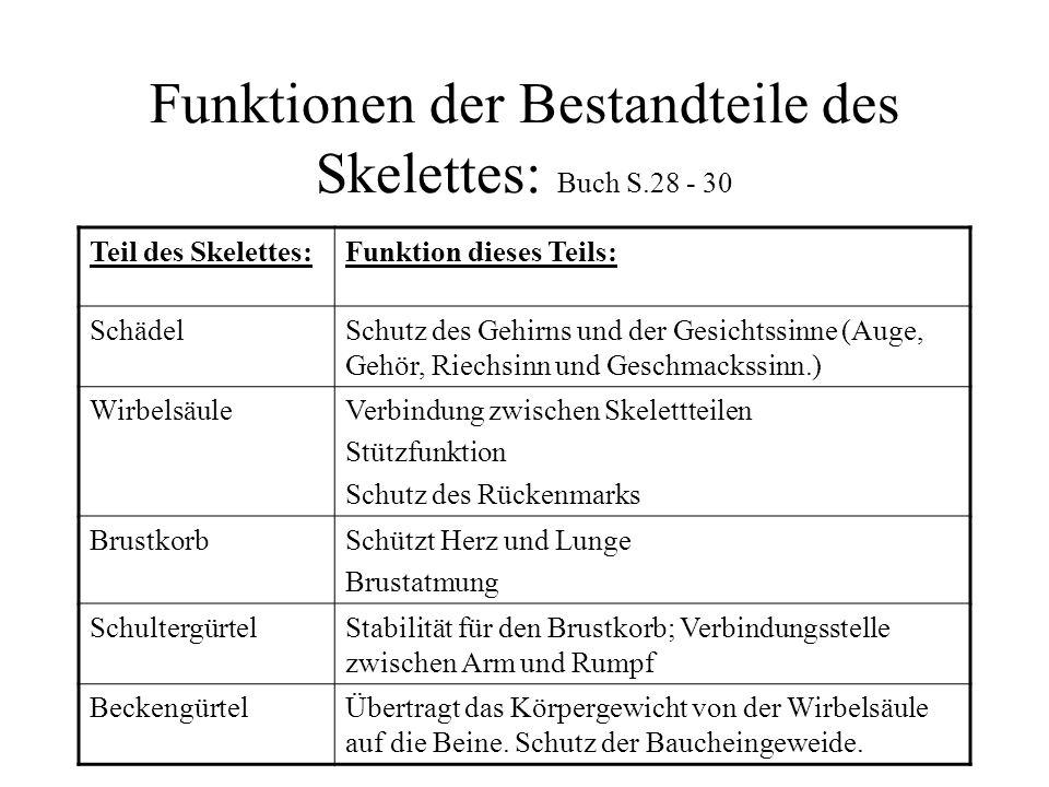 Funktionen der Bestandteile des Skelettes: Buch S.28 - 30 Teil des Skelettes:Funktion dieses Teils: SchädelSchutz des Gehirns und der Gesichtssinne (A