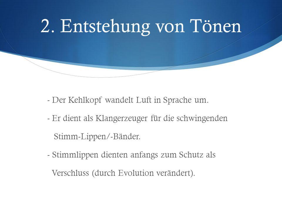 2. Entstehung von Tönen - Der Kehlkopf wandelt Luft in Sprache um. - Er dient als Klangerzeuger für die schwingenden Stimm-Lippen/-Bänder. - Stimmlipp