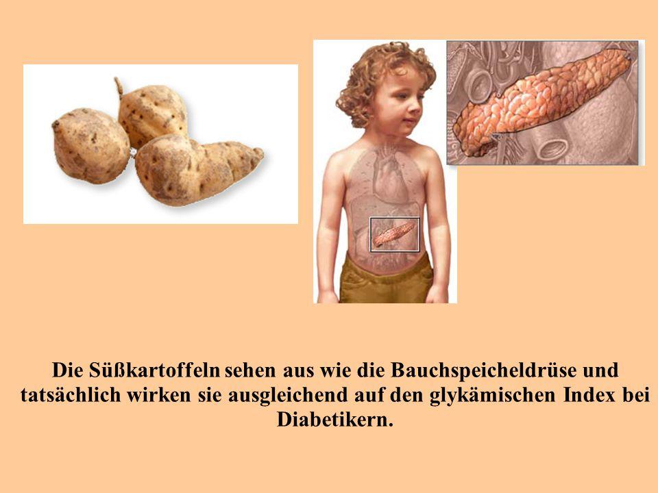 Die Süßkartoffeln sehen aus wie die Bauchspeicheldrüse und tatsächlich wirken sie ausgleichend auf den glykämischen Index bei Diabetikern.
