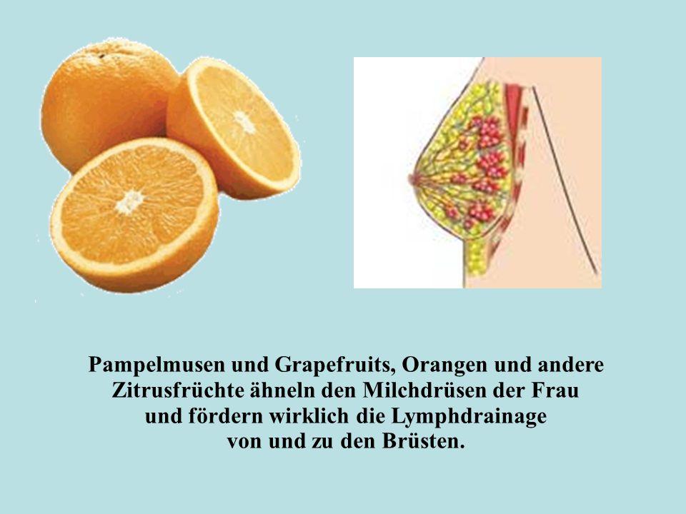 Pampelmusen und Grapefruits, Orangen und andere Zitrusfrüchte ähneln den Milchdrüsen der Frau und fördern wirklich die Lymphdrainage von und zu den Brüsten.