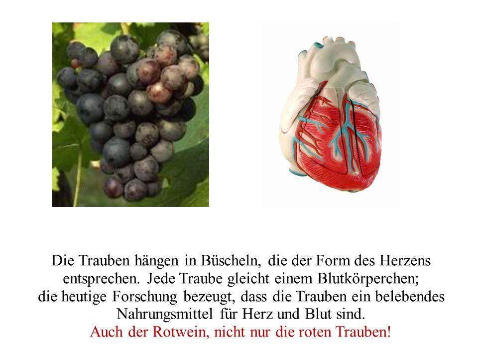Die Trauben hängen in Büscheln, die der Form des Herzens entsprechen.
