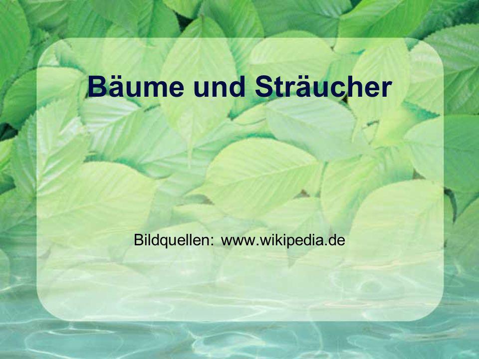 Bäume und Sträucher Bildquellen: www.wikipedia.de