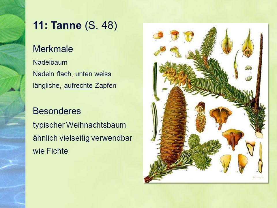 11: Tanne (S. 48) Merkmale Nadelbaum Nadeln flach, unten weiss längliche, aufrechte Zapfen Besonderes typischer Weihnachtsbaum ähnlich vielseitig verw