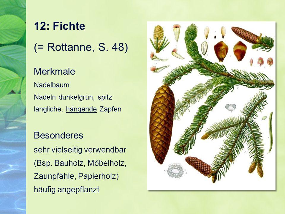 12: Fichte (= Rottanne, S. 48) Merkmale Nadelbaum Nadeln dunkelgrün, spitz längliche, hängende Zapfen Besonderes sehr vielseitig verwendbar (Bsp. Bauh