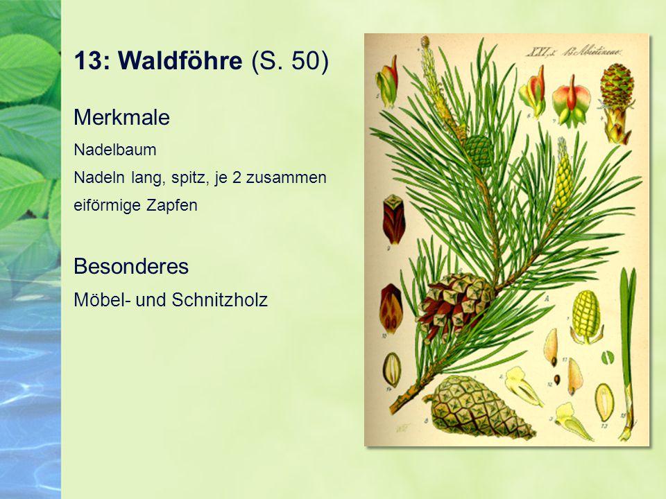 13: Waldföhre (S. 50) Merkmale Nadelbaum Nadeln lang, spitz, je 2 zusammen eiförmige Zapfen Besonderes Möbel- und Schnitzholz