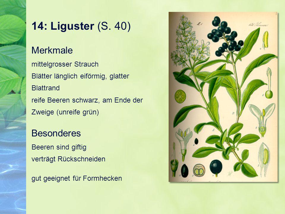 14: Liguster (S. 40) Merkmale mittelgrosser Strauch Blätter länglich eiförmig, glatter Blattrand reife Beeren schwarz, am Ende der Zweige (unreife grü