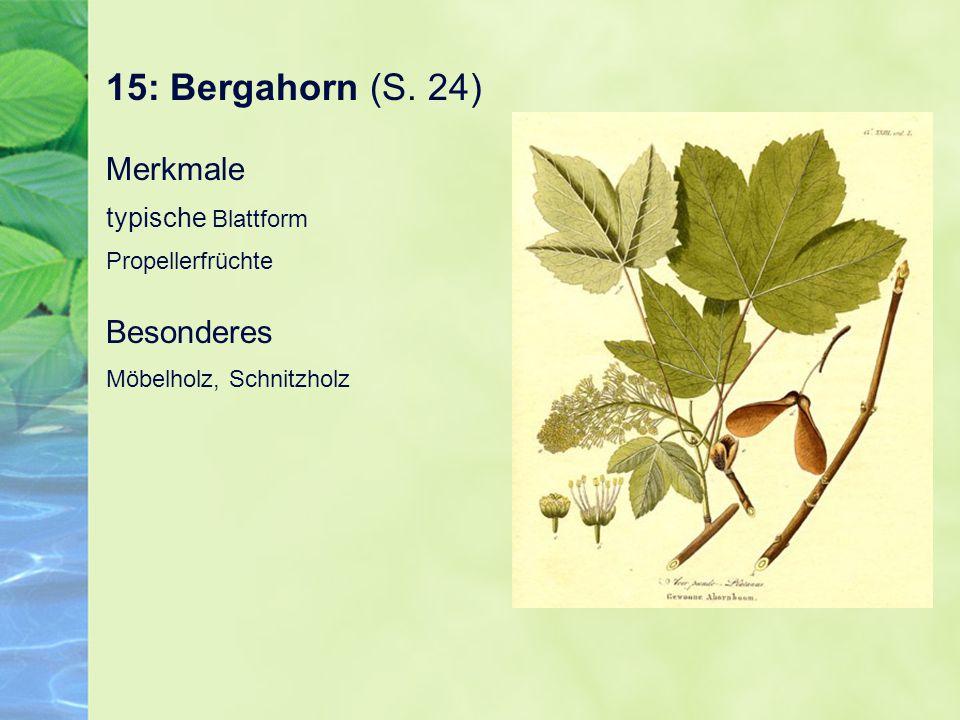 15: Bergahorn (S. 24) Merkmale typische Blattform Propellerfrüchte Besonderes Möbelholz, Schnitzholz