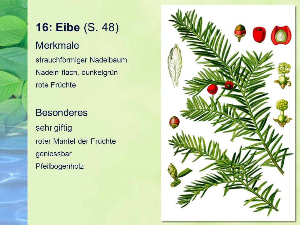 16: Eibe (S. 48) Merkmale strauchförmiger Nadelbaum Nadeln flach, dunkelgrün rote Früchte Besonderes sehr giftig roter Mantel der Früchte geniessbar P