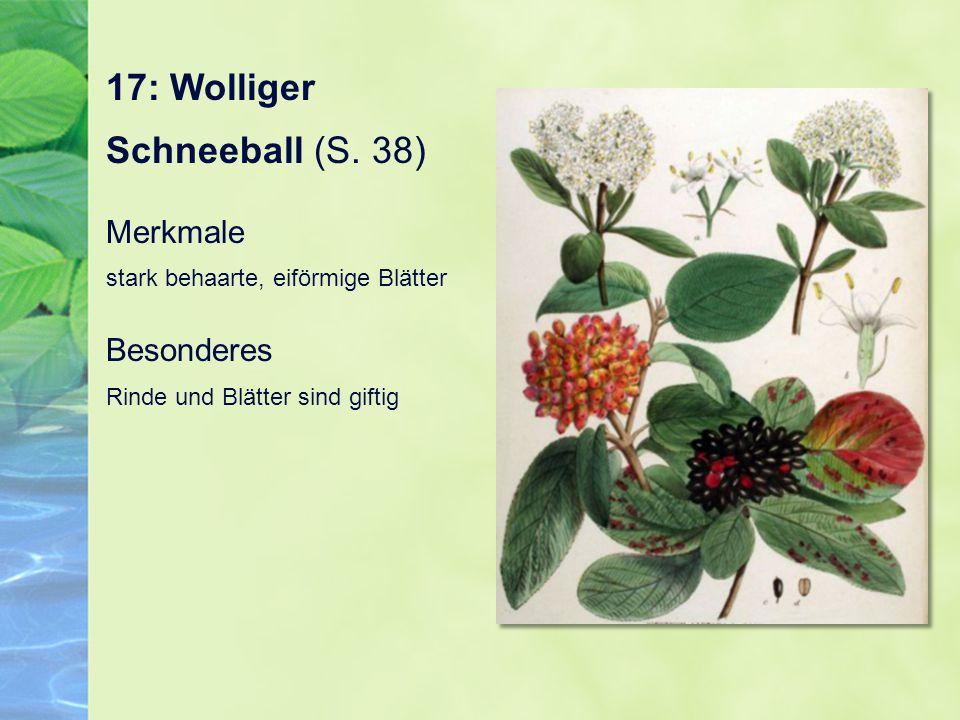 17: Wolliger Schneeball (S. 38) Merkmale stark behaarte, eiförmige Blätter Besonderes Rinde und Blätter sind giftig