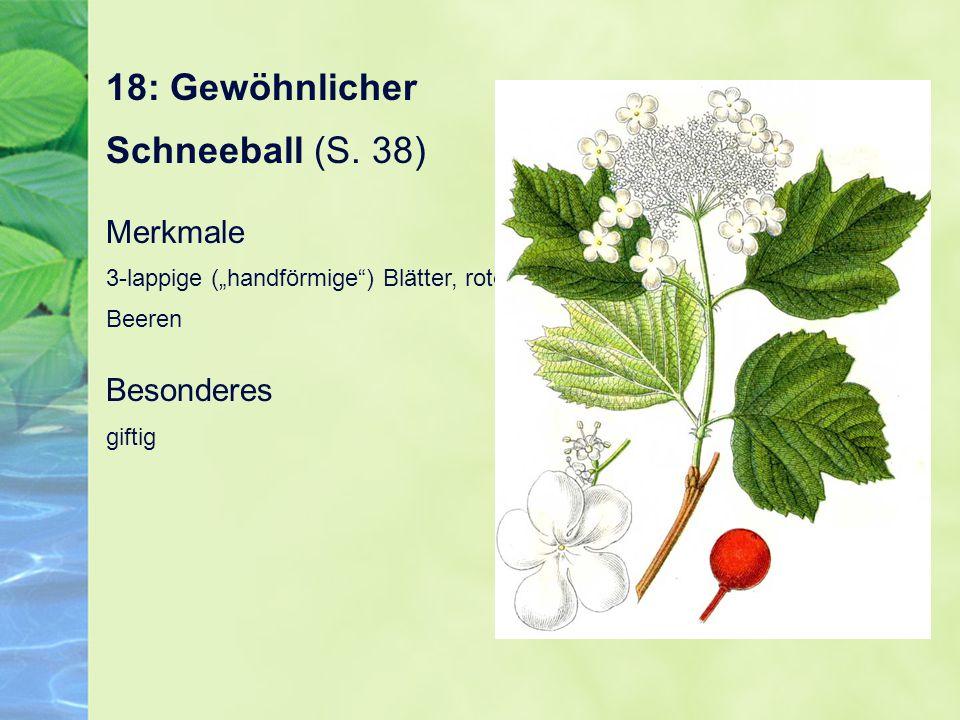"18: Gewöhnlicher Schneeball (S. 38) Merkmale 3-lappige (""handförmige"") Blätter, rote Beeren Besonderes giftig"