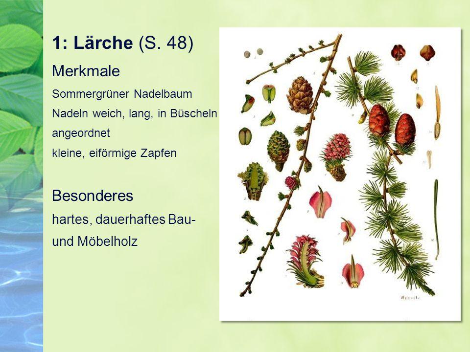 1: Lärche (S. 48) Merkmale Sommergrüner Nadelbaum Nadeln weich, lang, in Büscheln angeordnet kleine, eiförmige Zapfen Besonderes hartes, dauerhaftes B