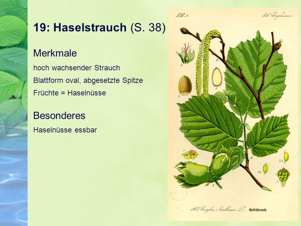 19: Haselstrauch (S. 38) Merkmale hoch wachsender Strauch Blattform oval, abgesetzte Spitze Früchte = Haselnüsse Besonderes Haselnüsse essbar