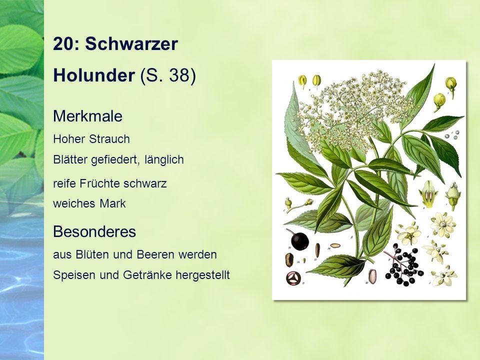 20: Schwarzer Holunder (S. 38) Merkmale Hoher Strauch Blätter gefiedert, länglich reife Früchte schwarz weiches Mark Besonderes aus Blüten und Beeren