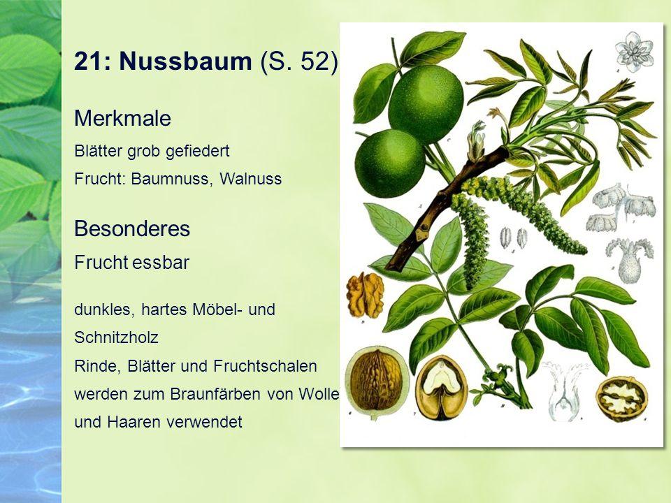 21: Nussbaum (S. 52) Merkmale Blätter grob gefiedert Frucht: Baumnuss, Walnuss Besonderes Frucht essbar dunkles, hartes Möbel- und Schnitzholz Rinde,