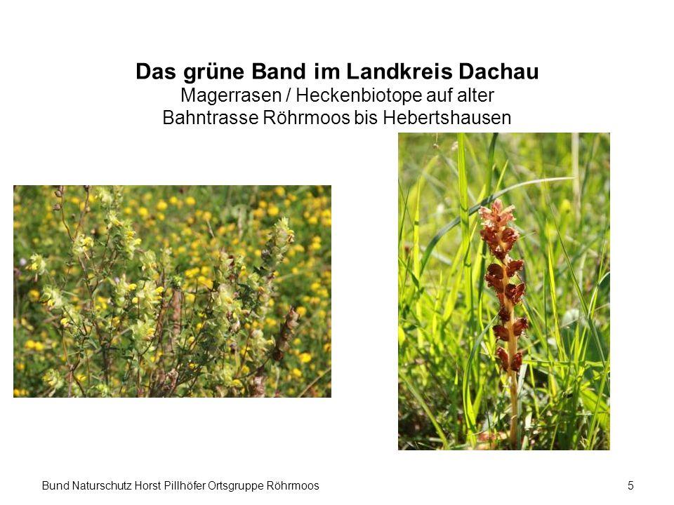 Bund Naturschutz Horst Pillhöfer Ortsgruppe Röhrmoos5 Das grüne Band im Landkreis Dachau Magerrasen / Heckenbiotope auf alter Bahntrasse Röhrmoos bis Hebertshausen