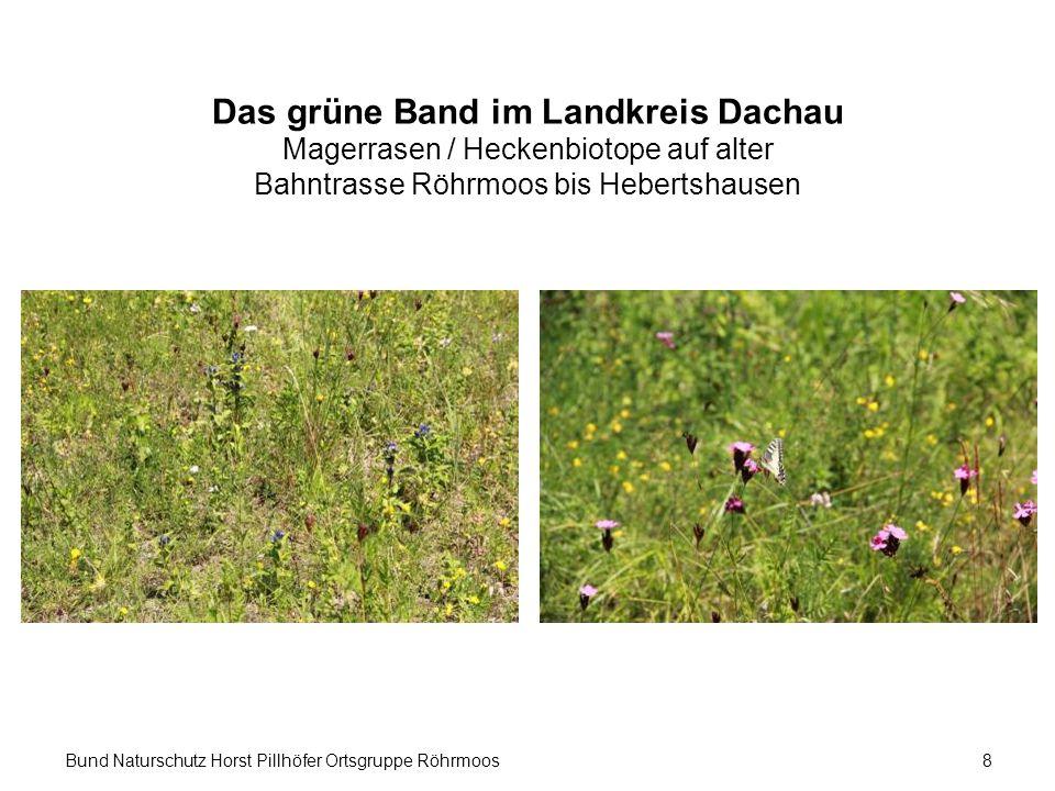Bund Naturschutz Horst Pillhöfer Ortsgruppe Röhrmoos8 Das grüne Band im Landkreis Dachau Magerrasen / Heckenbiotope auf alter Bahntrasse Röhrmoos bis Hebertshausen