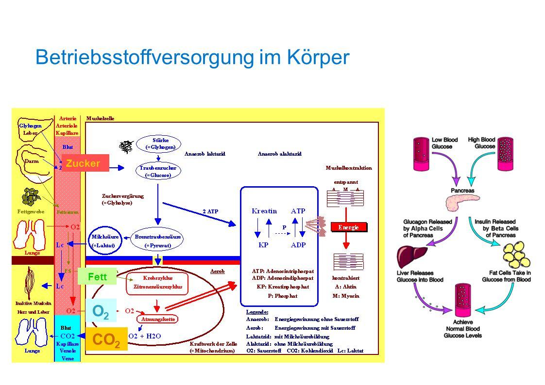 Betriebsstoffversorgung im Körper Zucker Fett O2O2 CO 2
