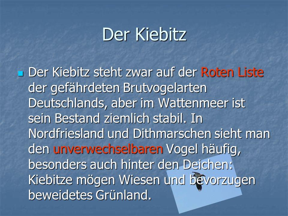 Der Kiebitz Der Kiebitz steht zwar auf der Roten Liste der gefährdeten Brutvogelarten Deutschlands, aber im Wattenmeer ist sein Bestand ziemlich stabi