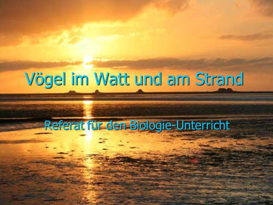Quelle: http://www.nochfragen.at/bild/nochFragenSprechblase5383.png Quelle: http://www.nw.schule.de/vie/afg/bretter/methoden/ui/grafik/questions.gif