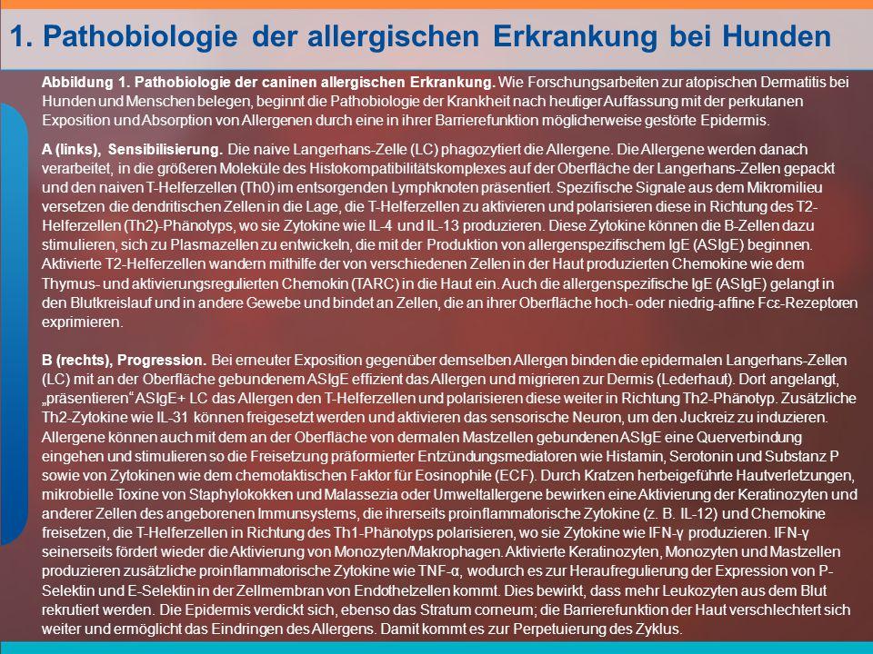 Abbildung 1.Pathobiologie der caninen allergischen Erkrankung.