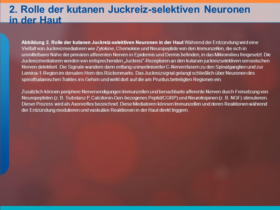 2.Rolle der kutanen Juckreiz-selektiven Neuronen in der Haut Abbildung 2.
